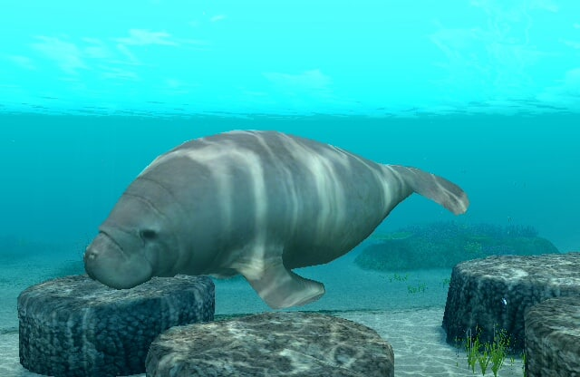 6. The West Indian manatee