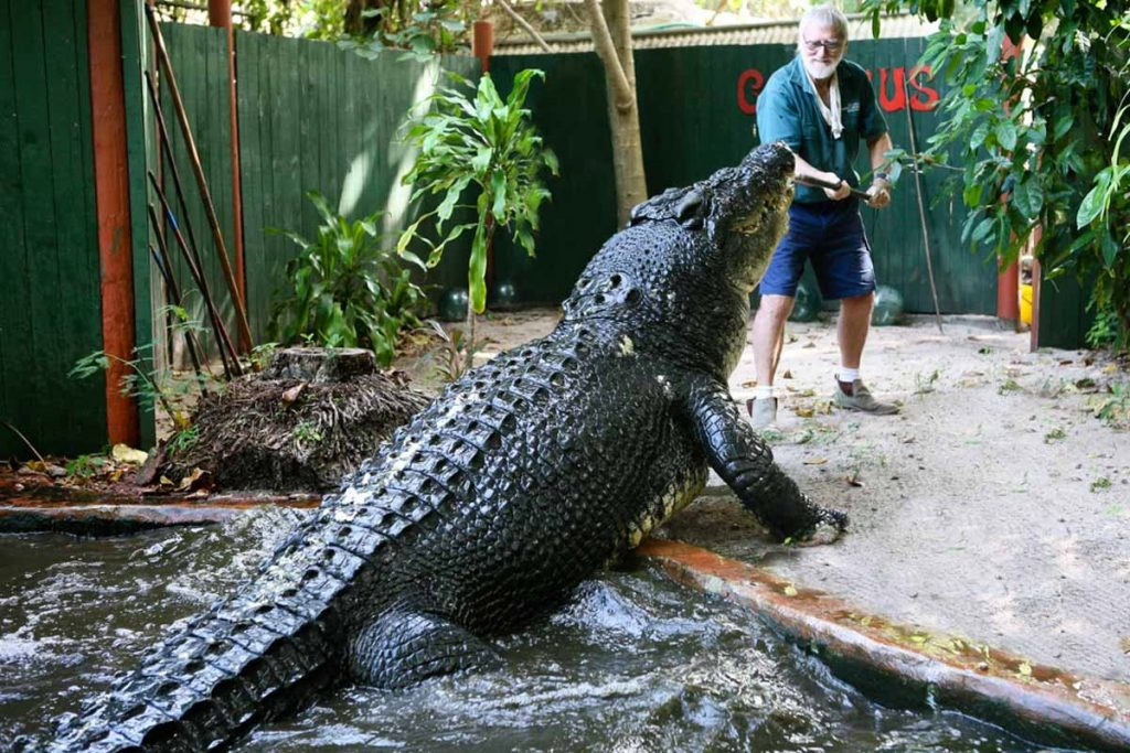 lolong largest crocodile