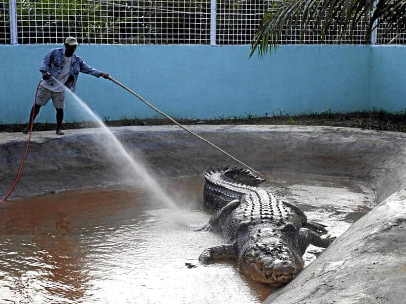 lolong longest crocodile