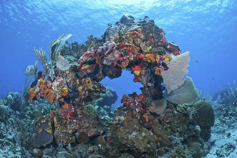 Mesoamerican Coral Reef