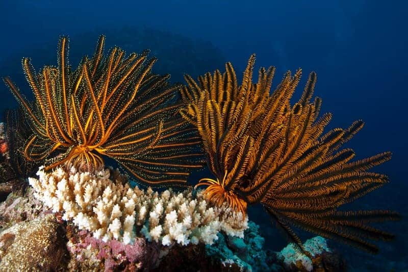 New Caledonian Coral Reef