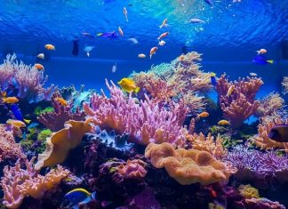 largest coral reefs in the world