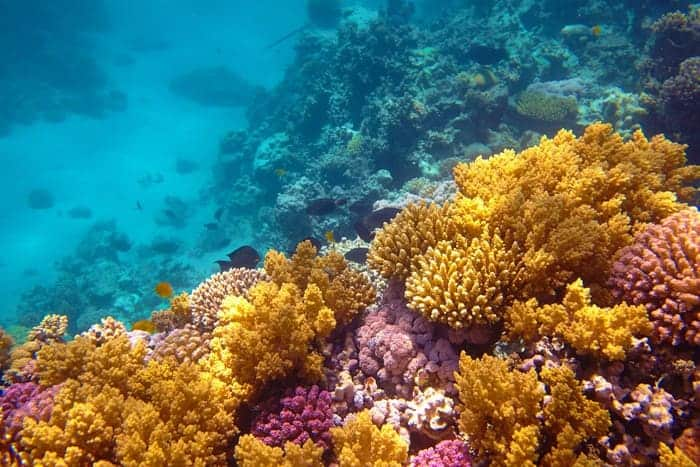 beauty of coral reef