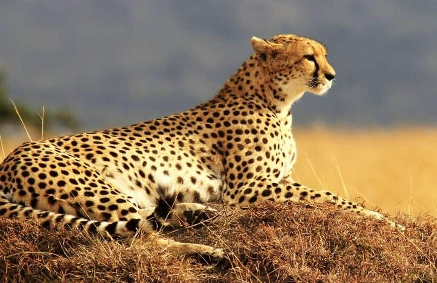20 Fastest Land Animals In The World - No  4 Is Unexpected